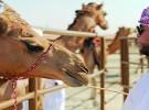 """""""الطقس العربي"""": موجة غبار جديدة تجتاح المملكة"""